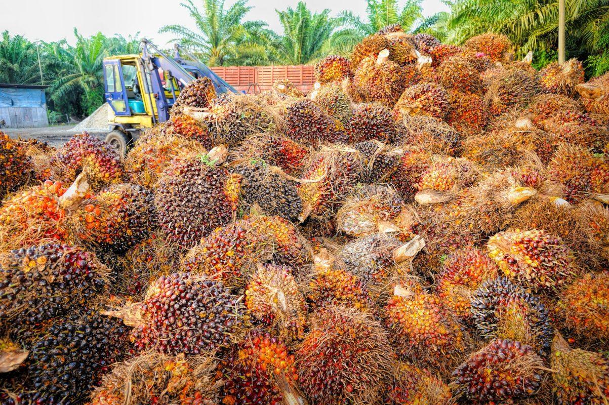 цены на пальмовое масло
